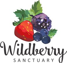 WILDBERRYSANCTUARY